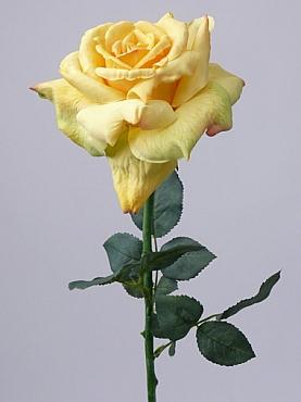 Trandafir Quiannie D12x7xH67 cm galben