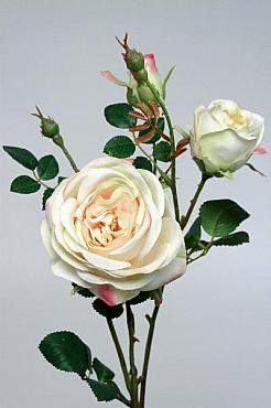 Trandafir tros D10x6x3xH60 cm HO crem