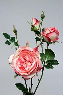 Trandafir tros D10x6x3xH60 cm HO roz