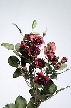 Trandafir tros Emily D4x3xH65 cm HO violet