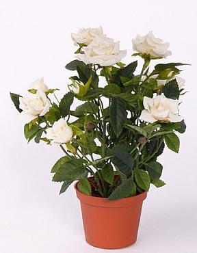 Trandafiri Diamond 20 cm alb