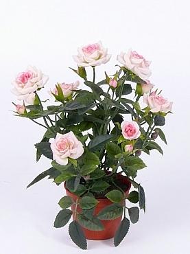 Trandafiri Diamond 23 cm roz