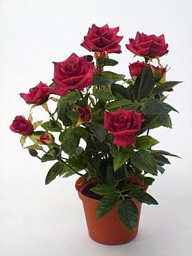 Trandafiri Diamond HO burgundy