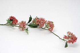 Viburnum 120 cm HO roz