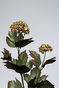 Viburnum 70 cm HO verde