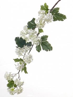 Viburnum 86 cm alb