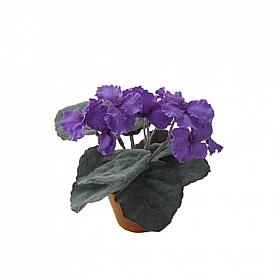 Violeta de Parma HO mov
