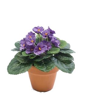 Violete Africane 11 cm mov Saintpaulia Bush