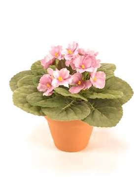 Violete Africane 11 cm roz Saintpaulia Bush