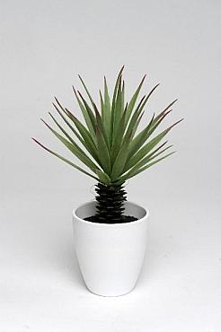 Yucca 21 cm HO